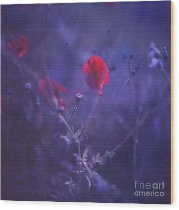 Red Poppy In Blue Medium Format Analog Hasselblad Film Photo Wood Print by Edward Olive