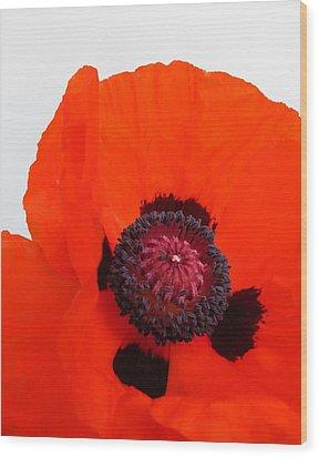 Red Poppy Wood Print by Ramona Johnston