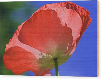 Red Poppy Wood Print