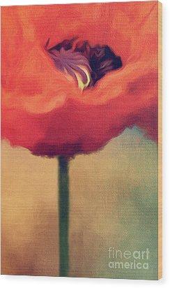 Red Poppy Wood Print by Rosie Nixon