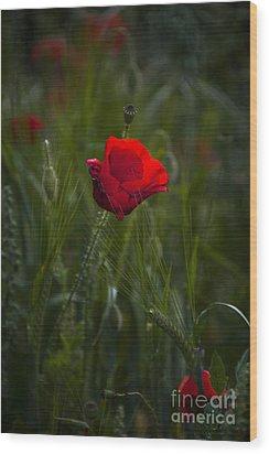 Red Poppy Wood Print by Svetlana Sewell