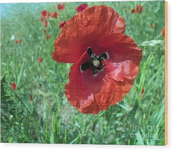 Wood Print featuring the photograph Red Poppy by Vesna Martinjak