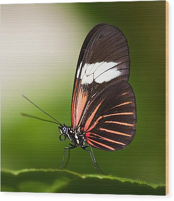 Wood Print featuring the photograph Red Postman Butterfly by Zoe Ferrie