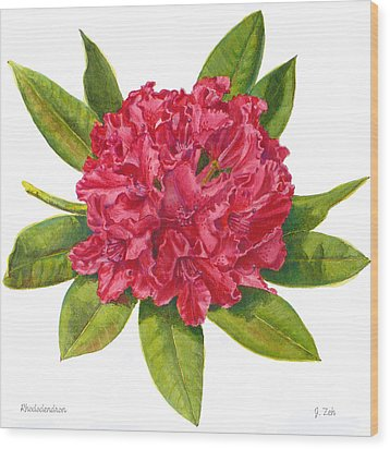 Red Rhododendron  Wood Print