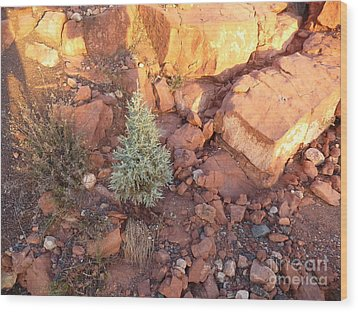 Red Rock Christmas Wood Print by Marlene Rose Besso