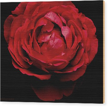 Wood Print featuring the photograph Red Rose by Charlotte Schafer