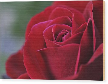 Red Rose Close 1 Wood Print