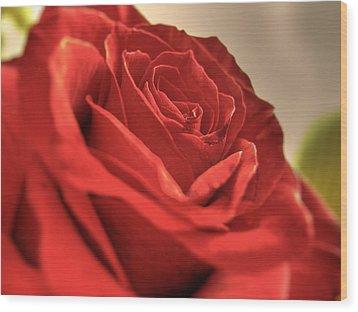 Red Rose Closeup Wood Print