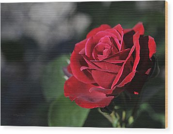 Red Rose Dark Wood Print