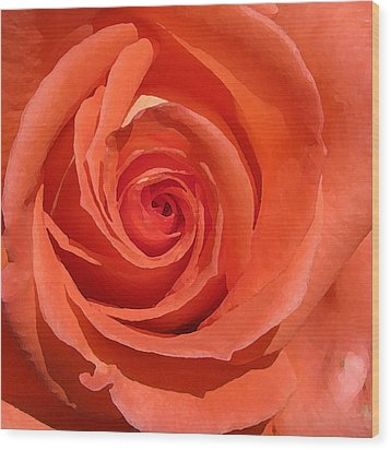 Red Rose Wood Print by Eva Csilla Horvath