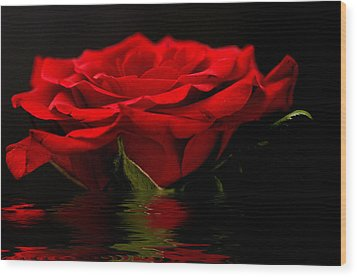 Red Rose Flood Wood Print by Steve Purnell