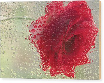Red Rose In The Rain Wood Print by Don Schwartz