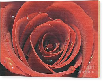 Red Rose Wood Print by Lars Ruecker