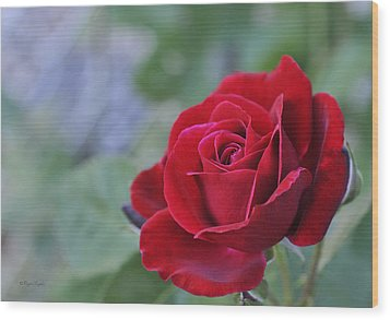 Red Rose Light Wood Print