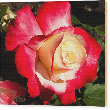 Wood Print featuring the photograph Red Rose by Margaret Buchanan