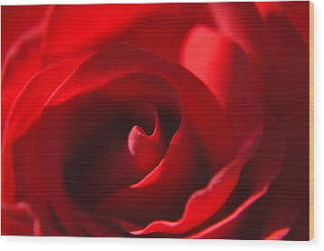 Red Rose Wood Print by Tikvah's Hope