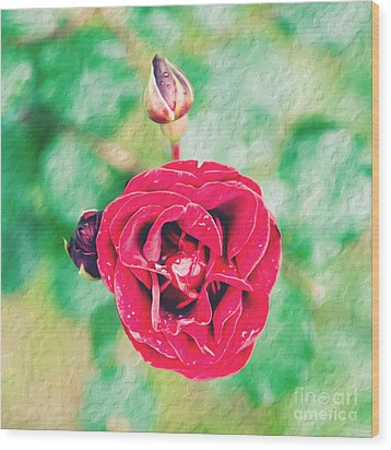 Wood Print featuring the photograph Red Rose by Yew Kwang