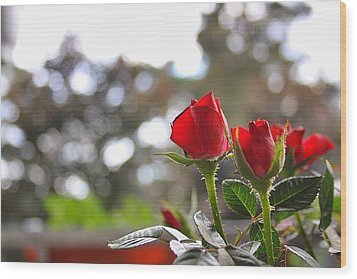 Red Roses Wood Print by Daniel Precht