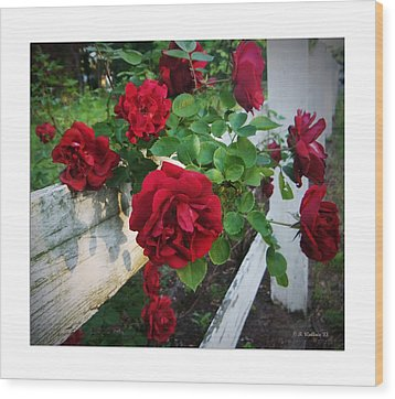 Red Roses - White Fence Wood Print by Brian Wallace