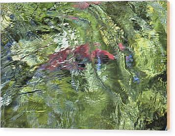 Wood Print featuring the photograph Red Salmon In Steep Creek by Cathy Mahnke