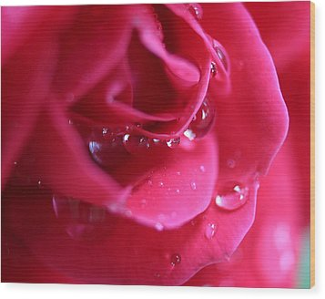 Red Scented Rose Wood Print