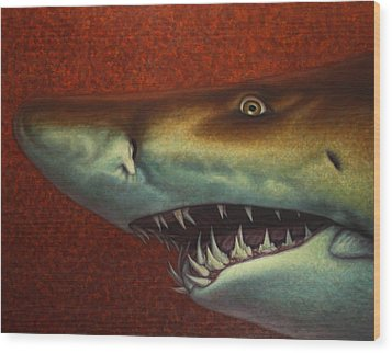 Red Sea Shark Wood Print by James W Johnson