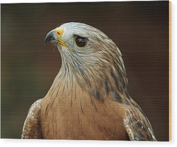 Wood Print featuring the photograph Red-shouldered Hawk by Doug Herr