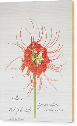 Red Spider-lily Wood Print