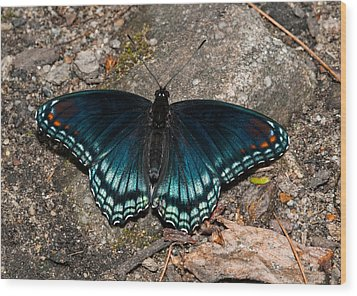 Red Spotted Purple Butterfly Wood Print by Lara Ellis