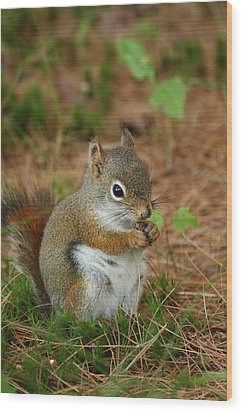 Red Squirrel In Acadia National Park Wood Print by Acadia Photography