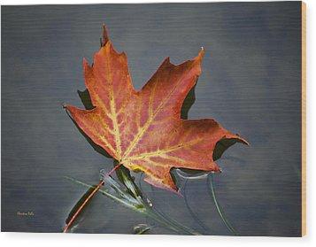 Red Sugar Maple Leaf Wood Print by Christina Rollo