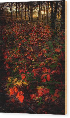 Red Sumac Wood Print by Robert Charity