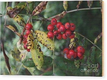 Red Summer Berries - Whistler Wood Print by Amanda Holmes Tzafrir
