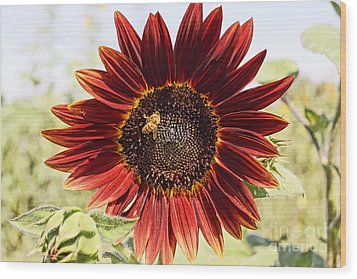 Red Sunflower And Bee Wood Print