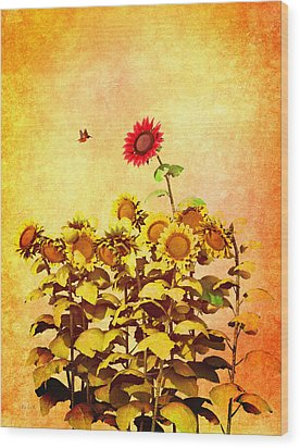 Red Sunflower Wood Print by Bob Orsillo