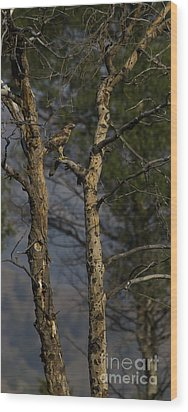 Red-tail Hawk   #0596 Wood Print by J L Woody Wooden
