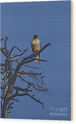 Red-tail Hawk   #0622 Wood Print by J L Woody Wooden