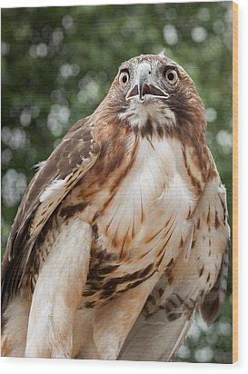 Red Tail Hawk Wood Print by Bill Wakeley