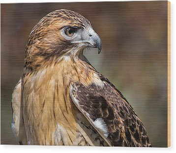 Red Tail Hawk Wood Print by Dale Kincaid