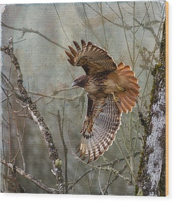 Red-tail Hawk In Flight Wood Print by Angie Vogel