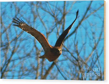 Wood Print featuring the photograph Red Tail Hawk In Flight by Peggy Franz