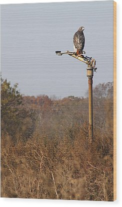 Red Tail Hawk New York Wood Print