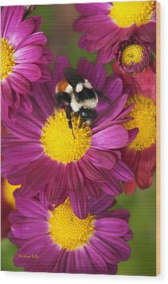 Red-tailed Bumble Bee Wood Print by Christina Rollo