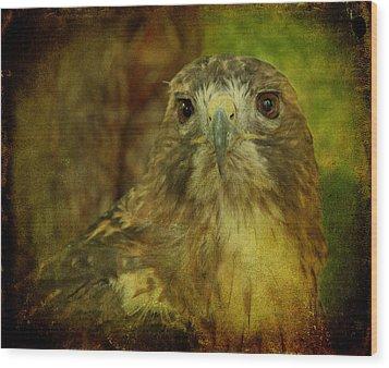 Red-tailed Hawk II Wood Print by Sandy Keeton