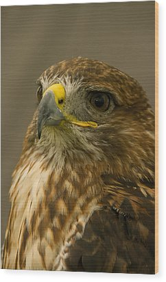 I'm So Proud - Red Tailed Hawk Wood Print by Jacqi Elmslie