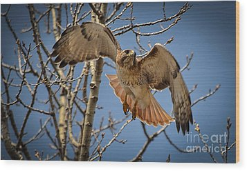 Red Tailed Hawk Wood Print by Julie Palencia