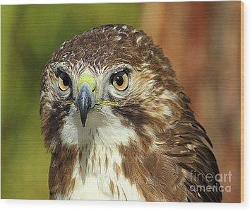 Red Tailed Hawk Wood Print by Lisa L Silva