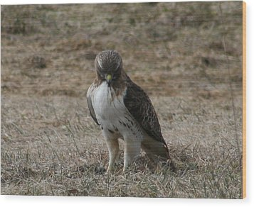 Red Tailed Hawk Wood Print by Neal Eslinger