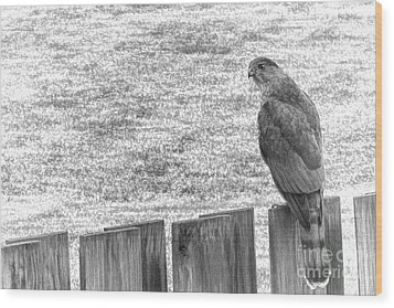 Red Tailed Hawk  Wood Print by Olivier Le Queinec