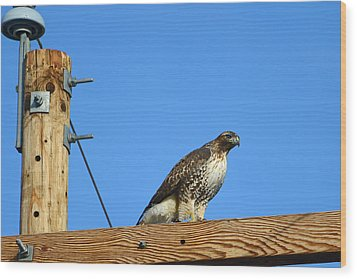 Red-tailed Hawk On A Power Pole Wood Print by Eric Nielsen